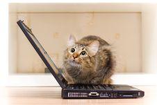 Free Redheaded Cat Sit On Black Notebook Stock Photos - 6081133