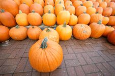 Free Rows Of Pumpkins. Autumn Royalty Free Stock Image - 6082496