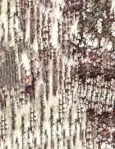 Free Close-up Bark Of Birch Texture Royalty Free Stock Images - 6082759