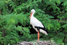 White Stork On The Nest Stock Photos