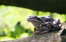 Free Frog Stock Photo - 6085690