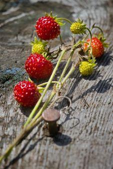 Free Strawberry Stock Photography - 6085742