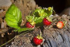 Free Strawberry Stock Image - 6085751