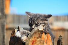 Free Grey Kitten Royalty Free Stock Images - 6087059