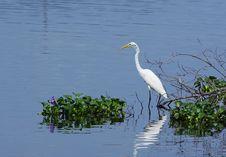 Free White Heron Stock Image - 6088141