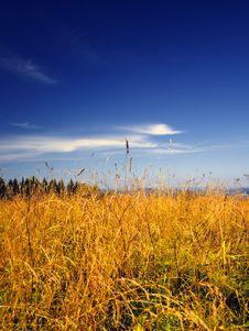 Free Grain Field Stock Photo - 6088180