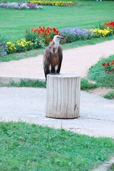 Free Bird Stock Photo - 6088240