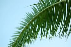 Free Palm Tree Leaf And Blue Sky Stock Photography - 6088332