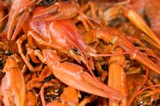 Free Boiled Red Crawfish Stock Photography - 6089402
