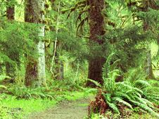 Free Rain Forest Stock Photo - 6089570