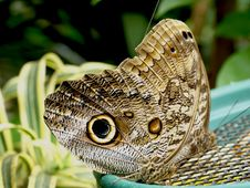 Free Butterfly Stock Image - 6089821