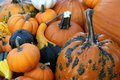 Free Pumpkins And Gourds Stock Images - 60885544