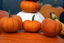 Free Orange And White Pumpkins Royalty Free Stock Photography - 60884947