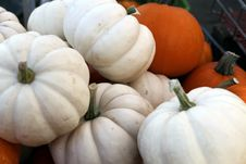 Free Orange And White Pumpkins Royalty Free Stock Image - 60885306