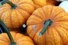 Free Pumpkins Stock Image - 60886051