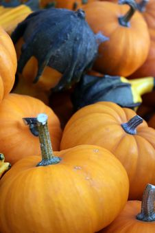 Free Pumpkins And Gourds Royalty Free Stock Photo - 60889935
