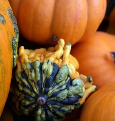 Free Decorative Gourd And Pumpkins Stock Images - 60890184