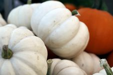 Free White Pumpkins Royalty Free Stock Photo - 60890605