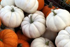 Free Orange And White Pumpkins Royalty Free Stock Photos - 60890718