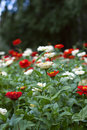 Free Flowerbed Stock Images - 6091204