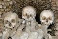 Free Skulls Stock Image - 6095461