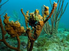 Free Coral Reef Stock Photos - 6090323