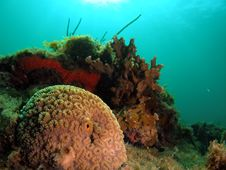 Free Coral Reef Royalty Free Stock Photography - 6090377