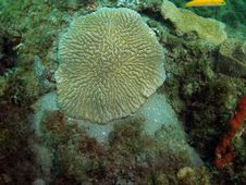 Free Coral Reef Stock Photography - 6090402