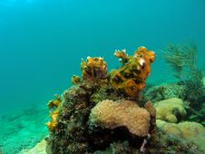 Free Coral Reef Royalty Free Stock Photos - 6090408
