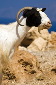 Free Goat Stock Photo - 6090910