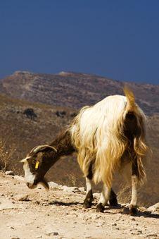 Free Funny Posing Goat Stock Image - 6090911