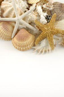 Free Shells Stock Photo - 6091090