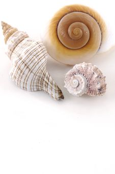 Free Shells Stock Photo - 6091160