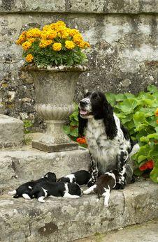 Free Dogs Stock Photos - 6091173