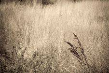 Free Grass From The Past Royalty Free Stock Image - 6091256