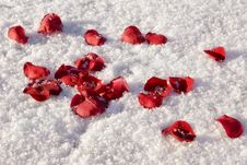 Free Rose Petals Royalty Free Stock Images - 6091529
