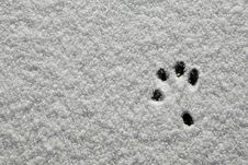 Snow Footprint Royalty Free Stock Image