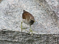Free Little Bird Stock Photography - 6092472