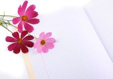 Free Flowers On A Writing-book Royalty Free Stock Images - 6092879