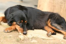 Free Sad Looking Domestic Dog Royalty Free Stock Image - 6094006