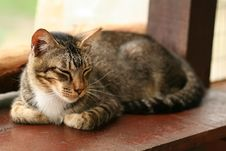 Free Sleeping Domestic Cat Royalty Free Stock Photography - 6094097