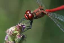 Free The Red Dragonfly Stock Photo - 6094140