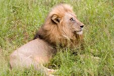Free Lion At Rest Stock Image - 6095251