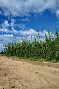 Free Hops Farm 3 Stock Image - 6095261