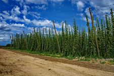 Free Hops Farm 2 Stock Images - 6095274