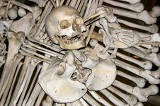 Free Skulls Royalty Free Stock Photography - 6095487