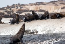 Seal Island Royalty Free Stock Photography
