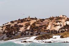 Seal Island Stock Photos
