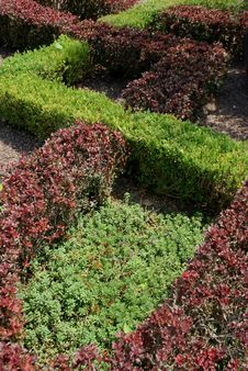 Free Zigzag Shrubbery Royalty Free Stock Image - 6095936