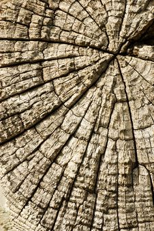 Free Wood Texture Royalty Free Stock Photography - 6096037